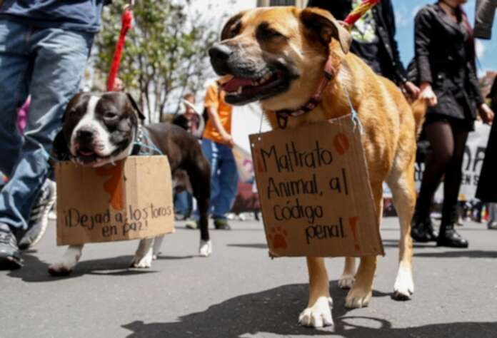 Marcha nacional contra el maltrato animal, próximo domingo | La FM