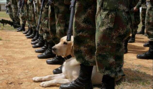 Soldados de Colombia