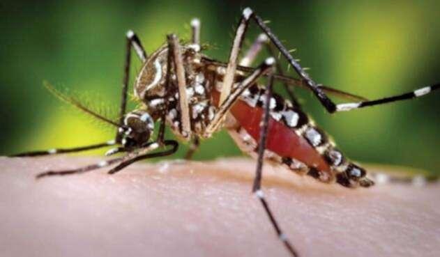 Dengue / Malaria