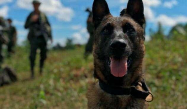 Killer, el perro antinarcóticos fallecido, despedido con honores