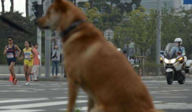 Los perros son incluidos en la dieta de los surcoreanos