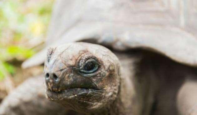 Tortugas, uno de los animales afectados por contaminación en el océano