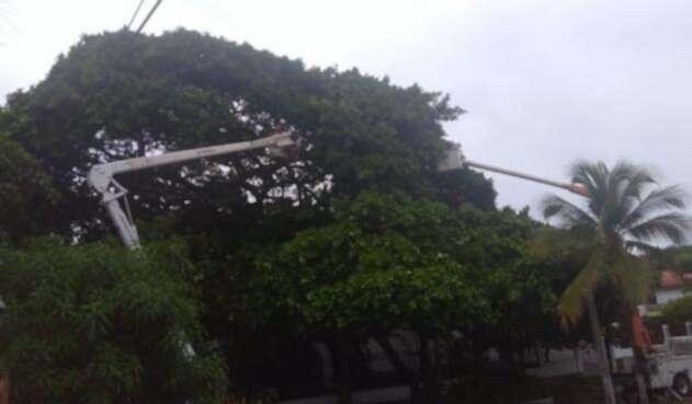 Caída de árbol sobre circuito eléctrico en Barranquilla