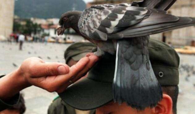 La mayor población de palomas en Bogotá está en la Plaza de Bolívar.