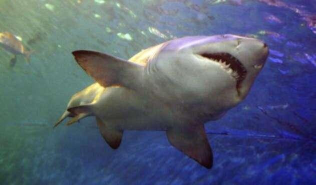Tiburón - referencial