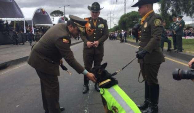 Sombra, el canino que ahora es el terror de los narcos