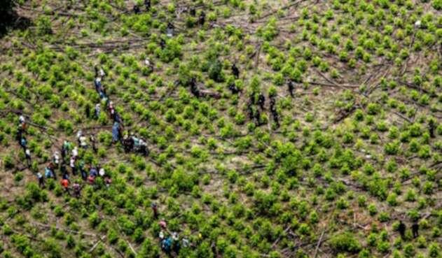 Trabajos sobre los cultivos ilícitos en el departamento de Nariño