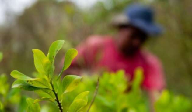 Cultivos ilegales en Colombia