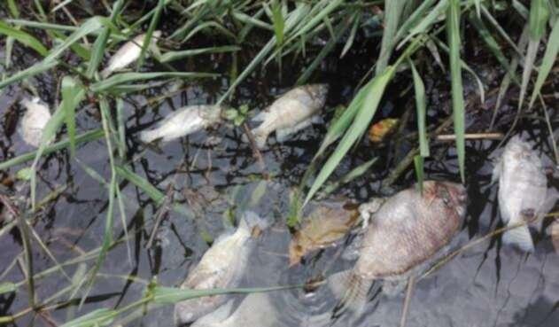 Pescadores los entierran en fosas comunes