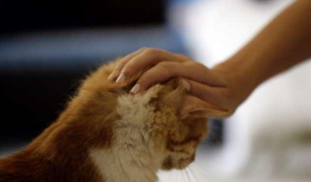 Mascotas en los hogares