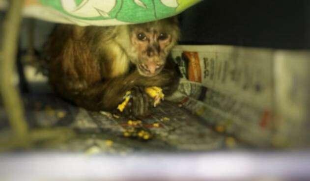 El mono langur fue atacado por los seis sujetos.