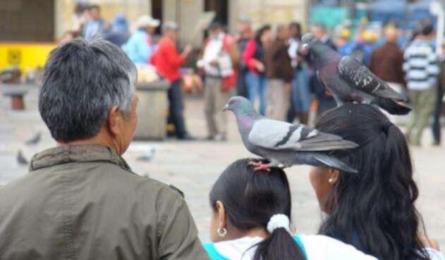 Palomas en la Plaza de Bolívar