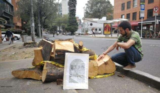 Tala de árboles en Chapinero