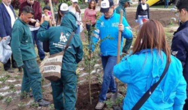 Siembra de árboles en Bogotá