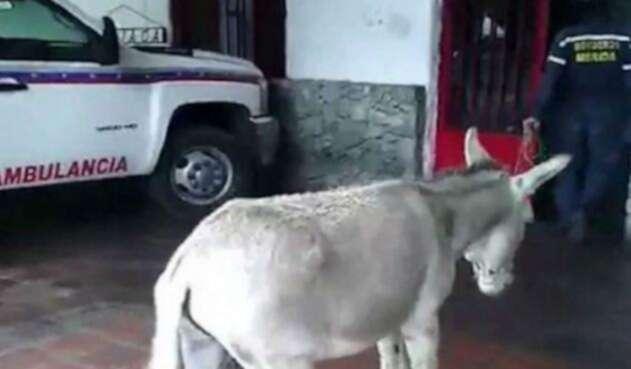 Fotograma del video viral en el que se compara a Maduro con un burro.