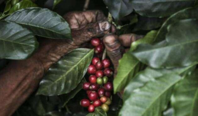 Cafeteros en Colombia