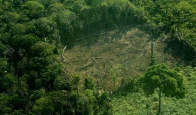 Tala de árboles en la Amazonía