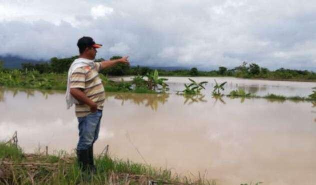 Inundaciones a cultivos de arroz en zona rural del municipio de El Zulia
