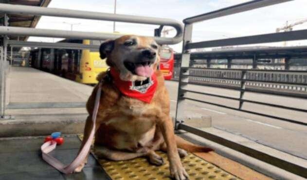 Las mascotas de razas grandes y medianas deben ingresar con collar y siempre estar sujetos por sus dueños.