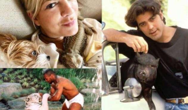 Mascotas exóticas de los famosos