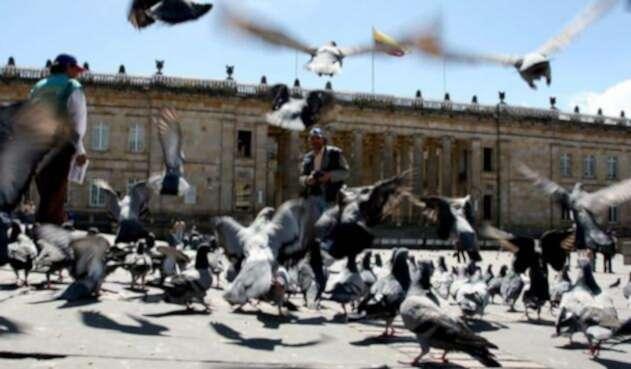 Sobrepoblación de palomas en la Plaza de Bolívar