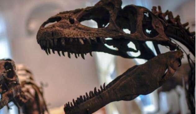 Descubren en Brasil el dinosaurio de cuello largo más antiguo del mundo.