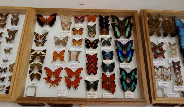 Mariposas halladas en Santander.