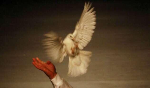 Las palomas mensajeras son una práctica ancestral en Alemania.