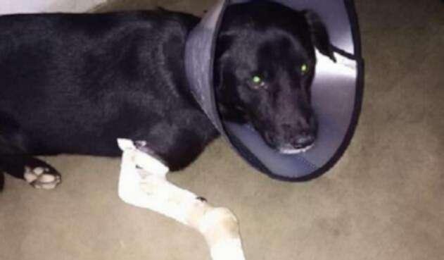 Nico, el perro herido
