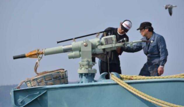 Japón retoma la caza comercial de ballenas