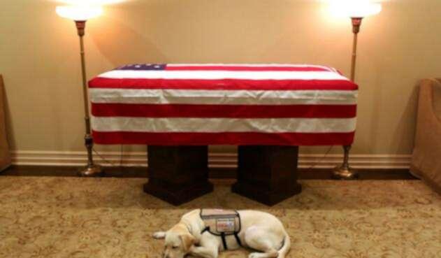 Sully, el perro de George H. W. Bush