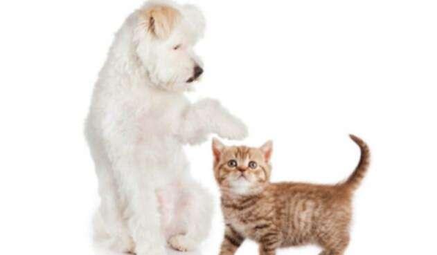 Reino Unido prohíbe venta de cachorros en tiendas