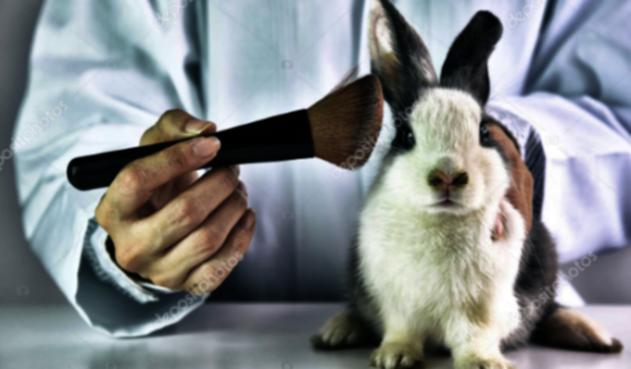 Colombia sería el primer país de América Latina en eliminar el uso de animales en laboratorio