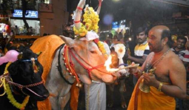 Festival Makar Sankaranti