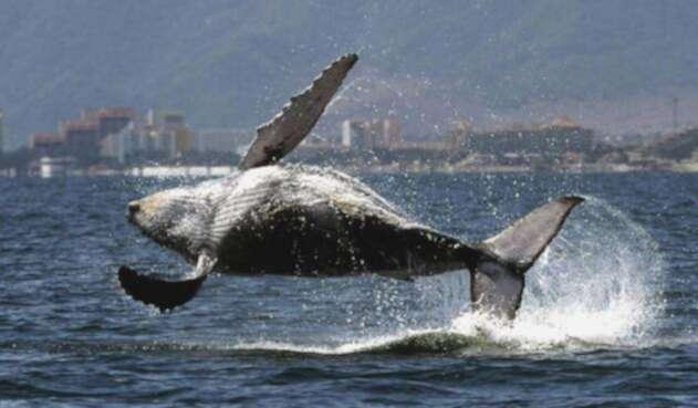 Contaminación en los oceanos