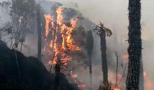 Los incendios forestales amenazan varias regiones del país en este inicio de 2019.