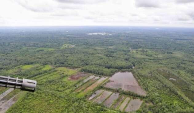 Zona de cultivos ilícitos en Tumaco (Nariño)