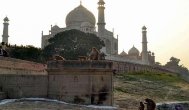 Los monos atacan a turistas en el Taj Mahal.