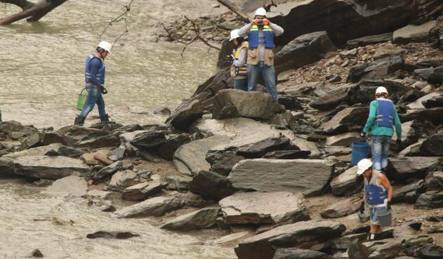 El rescate de peces en el río Cauca hecho por empleados de EPM