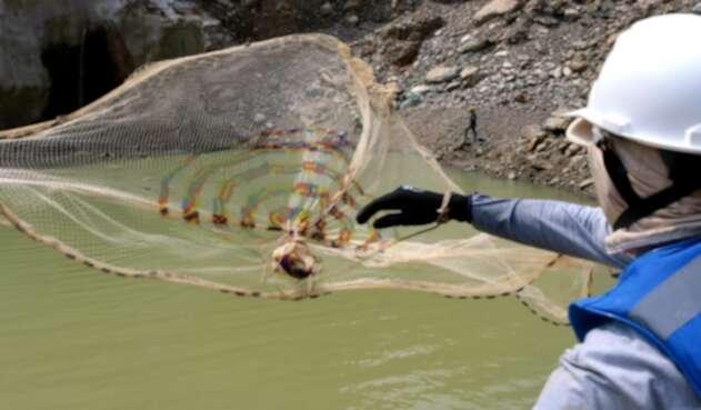 La crisis ha afectado el río Éufrates.