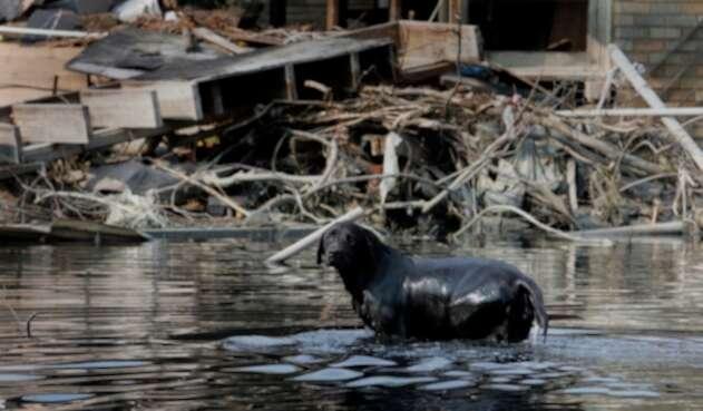 La gran mayoría de familias huyen de los lugares dejando a sus animales atrás.