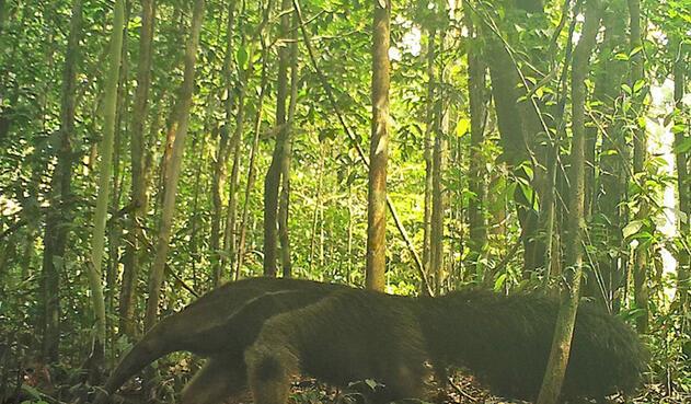 Animales vistos en la Amazonía colombiana