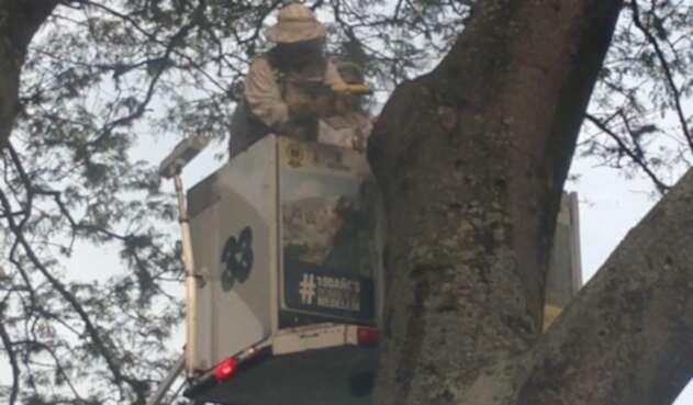 15 personas heridas dejó ataque de abejas en pleno centro de Medellín