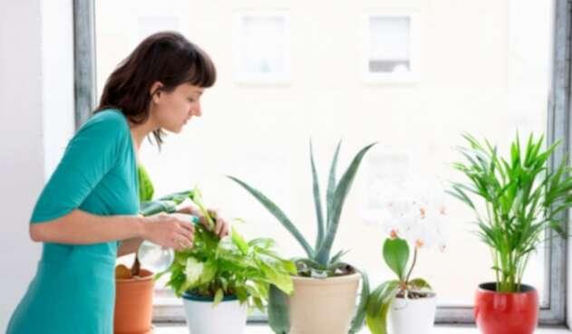 Plantas recomendadas para la casa