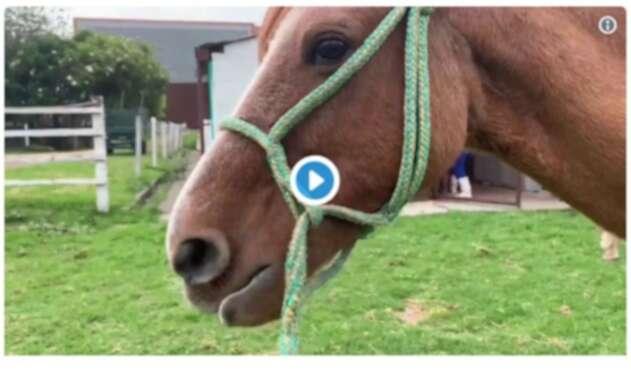 Se inició adopción de caballos en Bogotá.