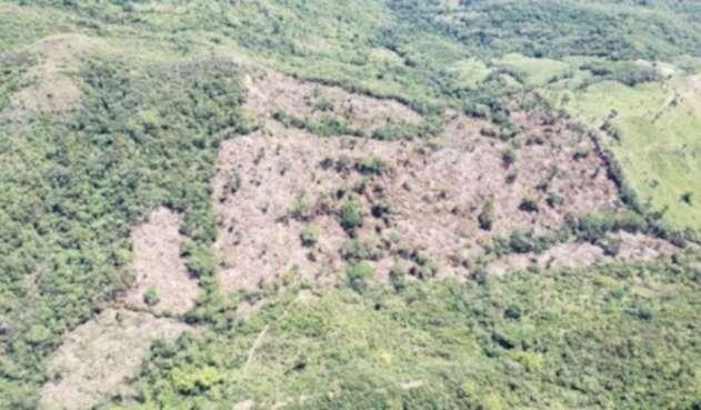 Manifestó se necesitan todas las autoridades ambientales para acabar con la deforestación