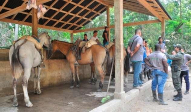 Caballos utilizados para el transporte en el Parque Tayrona, en inmediaciones de Santa Marta
