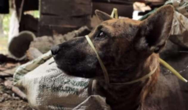 La comercialización ilegal de perro representa una amenaza para la salud pública.