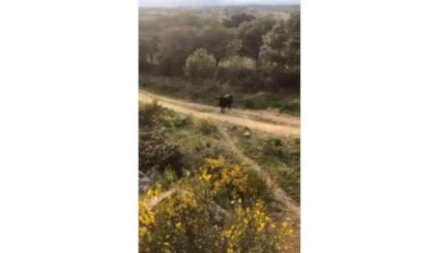 Un toro enfurecido atacó en España.