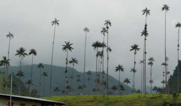 El Valle del Cocora, en el departamento del Quindío